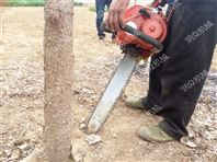 圆土坨起树机 带泥带根起苗机 大马力挖树机