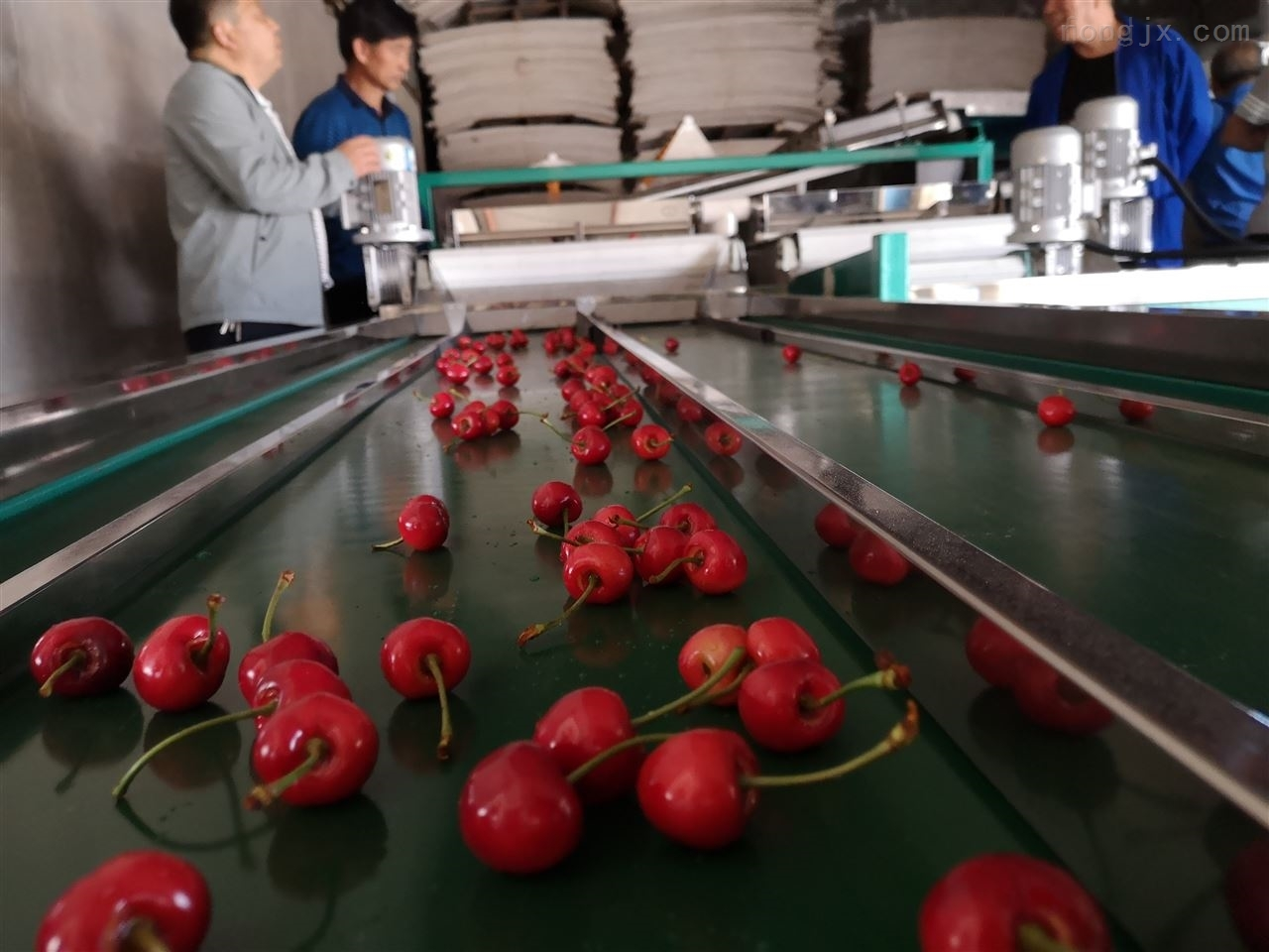 适合中国国情的6xy-2樱桃分级设备