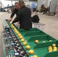多功能秋月梨分选机 小型选果机