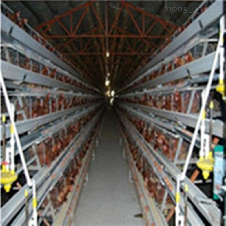 种蛋鸡笼三层阶梯四横门