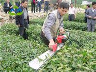 苗圃修剪造型機 汽油式籬笆綠籬修剪機