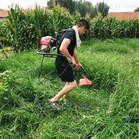 自走式本田草坪机 背肩式水稻牧草割草机