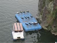 养鱼观光平台