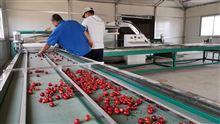 三代哪个厂家生产的小型樱桃分选机质量好