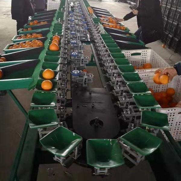 江西脐橙分选设备水果选果机分果机