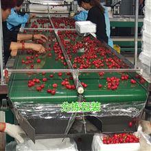 6xy-2樱桃选果机 技术突破应市场 分选设备创财富