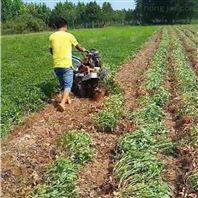 农用手扶拖拉机配套蜜薯收获机