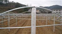 果蔬避雨栽培钢架棚成套材料