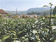 四川省農機購置補貼新增4個畜禽糞污資源化利用機具品目