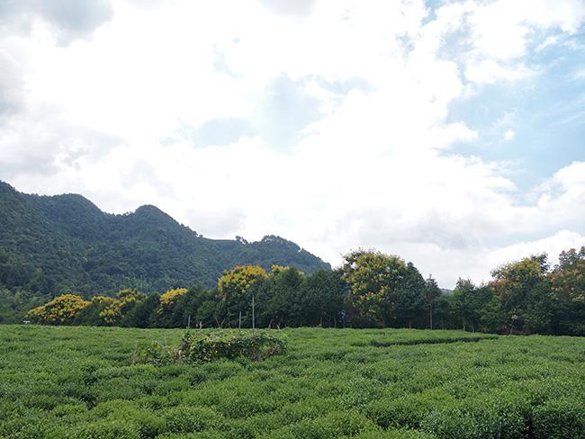 貴州省下達2000余萬元現代山地高效農機化資金助推農業現代化發展