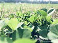 報名,2019花生農機農藝融合與社會化服務大會