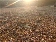 河北省關于2019年度小麥節水品種及配套技術推廣補貼項目品種推介情況的公示