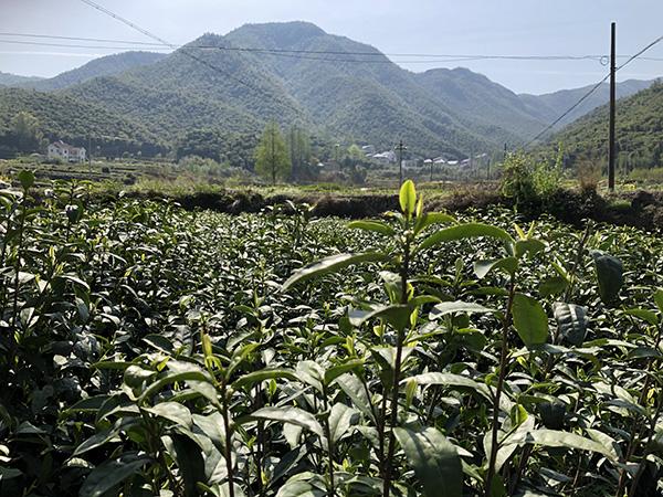 江西省部分市縣農機補貼最新動態