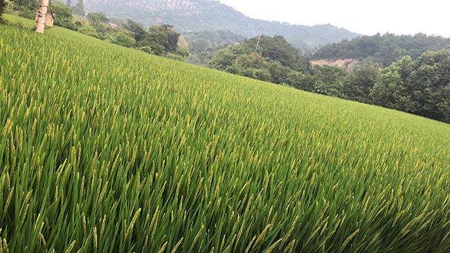 国家大力发展家庭农场,农民更有奔头了!