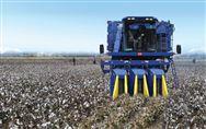 2019年棉花生产后期管理技术指导意见