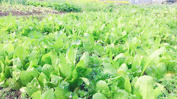 """9月18日:""""农产品批发价格200指数""""比昨天下降0.04个点"""