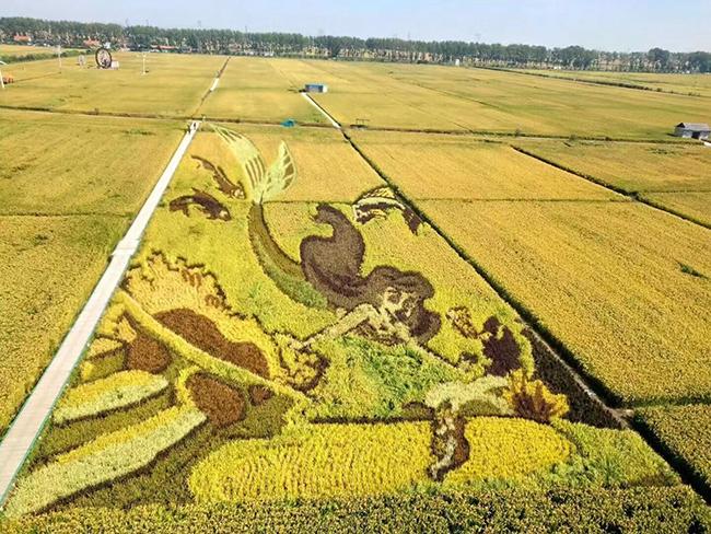 各地秋糧收獲情況良好,今年又是一個豐收年