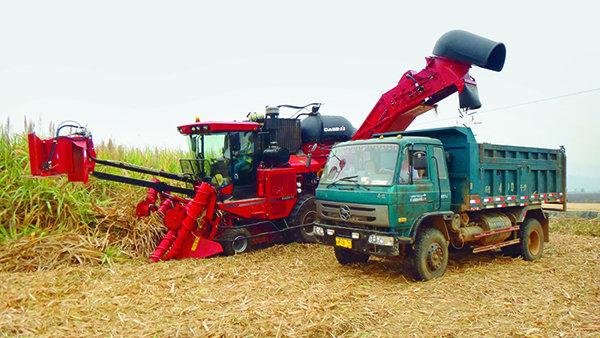 【看图】我国甘蔗收获机呈智能、全面多样化发展