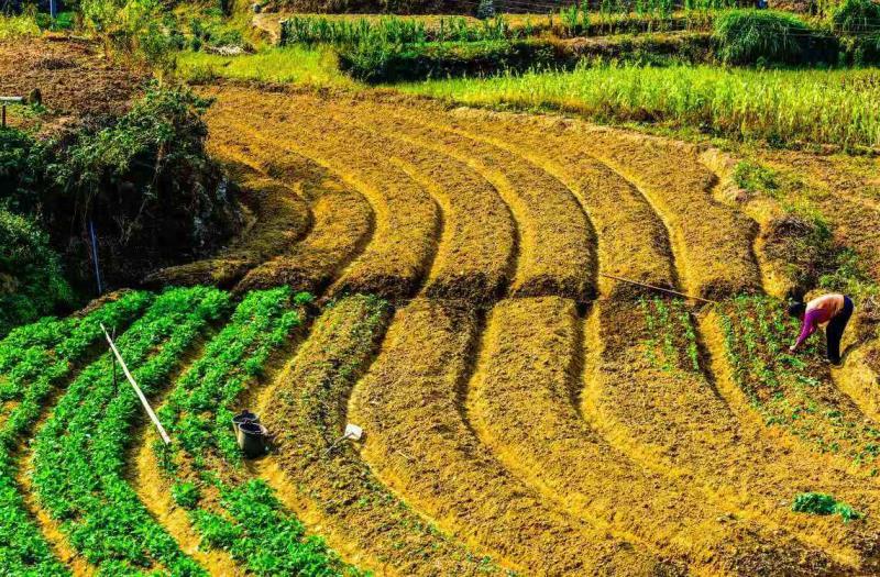 《中共中央国务院关于保持土地承包关系稳定并长久不变的意见》发布会举行,你关心的问题都在这里!