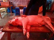 推动大场帮小户 加快恢复生猪生产