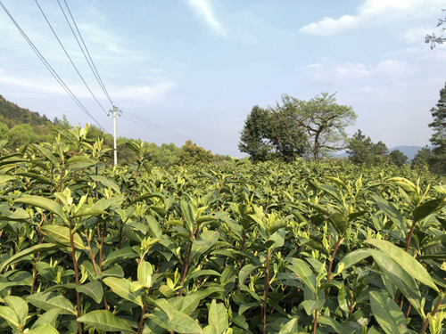 以绿色生态为导向,加大有机农产品补贴力度