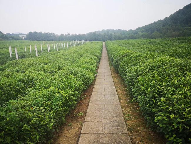 全国经济作物高质量发展与千赢国际城农艺融合推进落实会在山东寿光召开