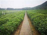 全国经济作物高质量发展与农机农艺融合推进落实会在山东寿光召开