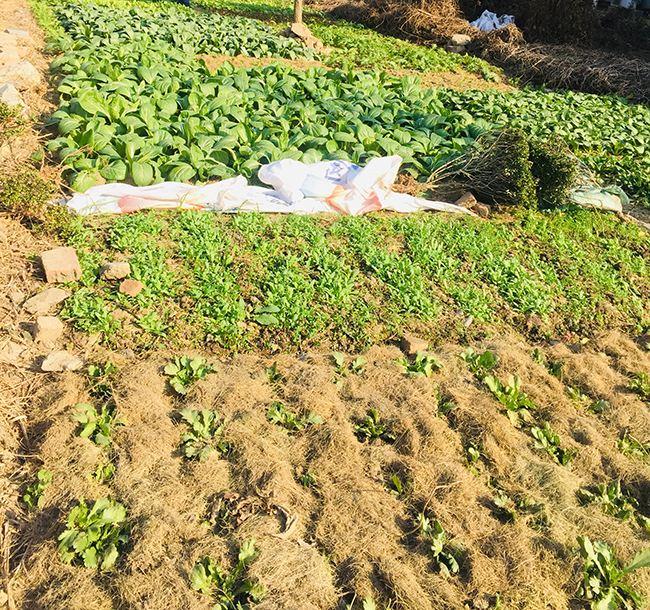 江苏省关于开展农作物秸秆机械化犁耕深翻还田试点工作的通知