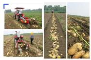 2019年農機暢銷榜:薯類收獲機三甲揭榜