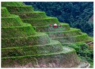 突破地形限制,極飛如何改變傳統農業生產方式?