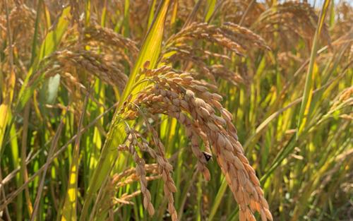 全面履行農業行政執法職能 ——農業農村部負責人就《農業綜合行政執法事項指導目錄》答記者問