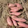手扶拖拉机收获机农用红薯挖掘机